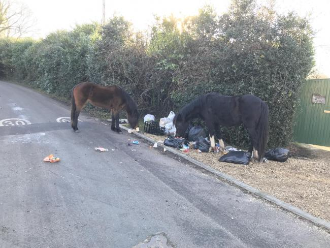 Ponies eat the rubbish