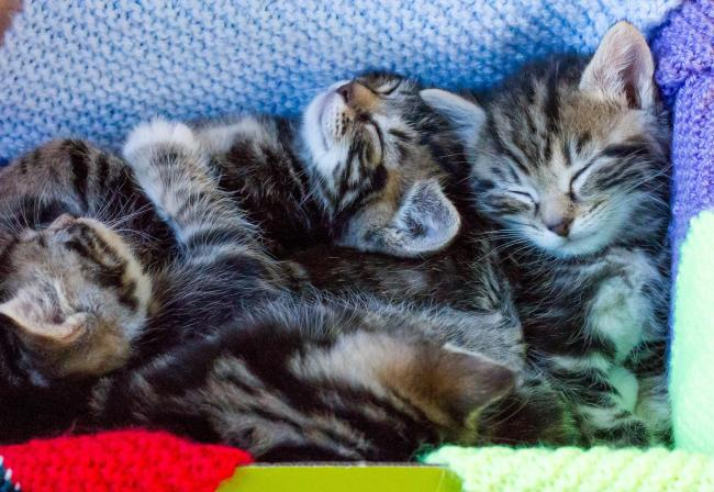 Kittens in foster homes. Picture: Steve Bond