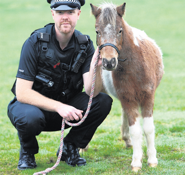 Piglet the Shetland pony with PC Andy Gamblin from the Dog Support Unit.