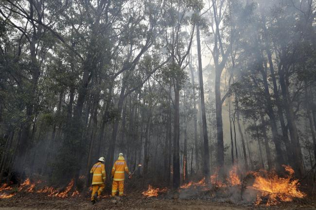 Firefighters manage a controlled burn near Tomerong, Australia, Wednesday, Jan. 8, 2020, in an effort to contain a larger fire nearby. Around 2,300 firefighters in New South Wales state were making the most of relatively benign conditions by frantically c
