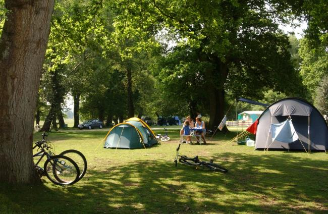 Campsites in the New Forest are staying closed this year because of the coronavirus outbreak.