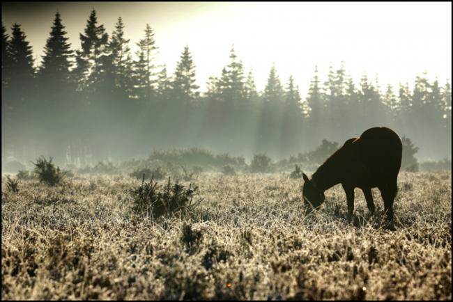 'New Forest will escape Government sell-off'
