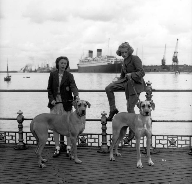 Dog show on Southampton Pier. Aug 17th 1946. © THE SOUTHERN DAILY ECHO ARCHIVES.  Ref  1050