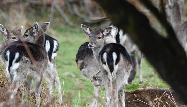 New Forest deer captured by Annette Gregory