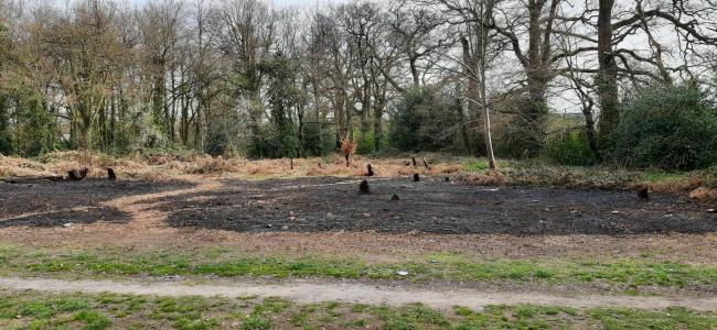 Fire damage in woodland area in Lordshill. photo from: Shirley Police/Twitter.