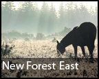 Daily Echo: New Forest East