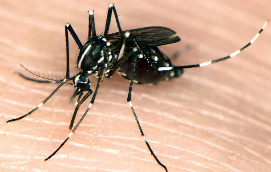 Mosquito infestation plaguing city residents