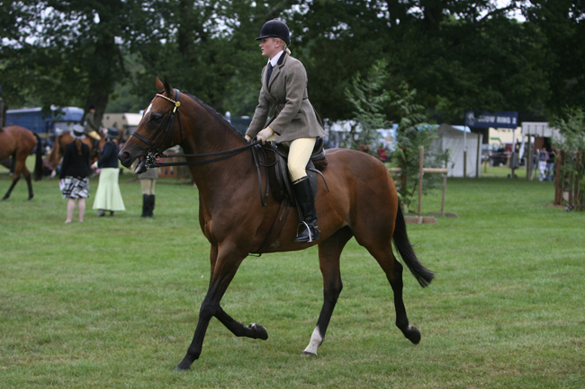 TV star opens New Forest show