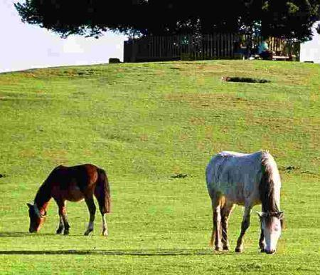 Daily Echo: New Forest Ponies at Boltons Bench near Lyndhurst