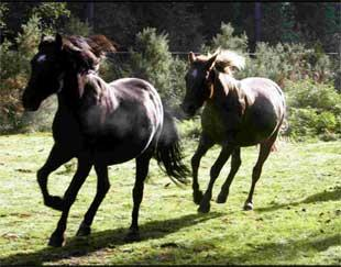 Calls to end branding of New Forest ponies