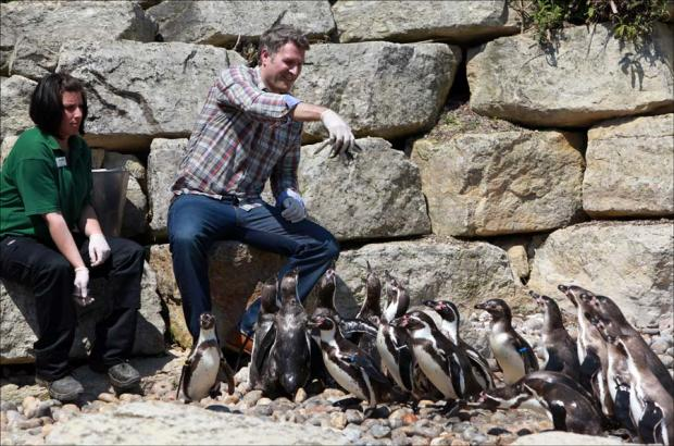 Penguins take a dip as TV star opens their new home