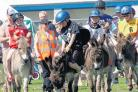 Thousands flock to donkey derby
