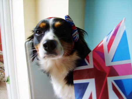 Patriotic Pets - Molly, owned by Joanne. Send a picture of your patriotic pet to picdesk@dailyecho.co.uk