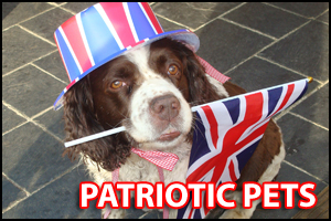 Daily Echo: Patriotic Pets