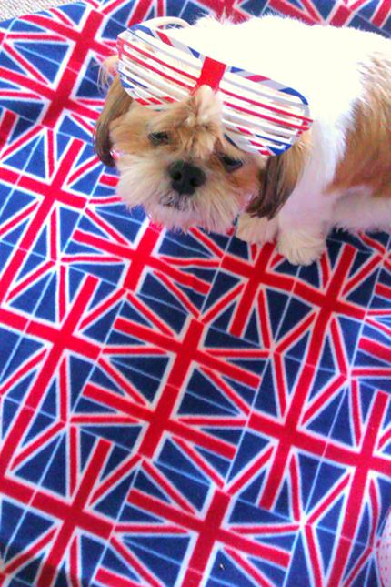 Patriotic Pets - George, owned by Amber-Rose Williams - Send a picture of your patriotic pet to picdesk@dailyecho.co.uk