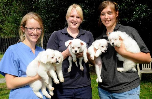 Daily Echo: Abandoned pups rescued by RSPCA