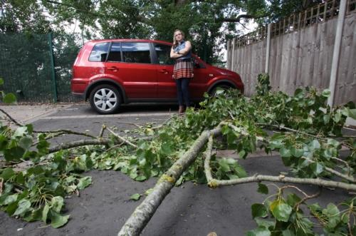 The damaged car and the fallen tree branch