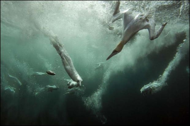 Southampton man named Wildlife Photographer of the Year