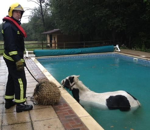 Firefighers rescue pony from pool