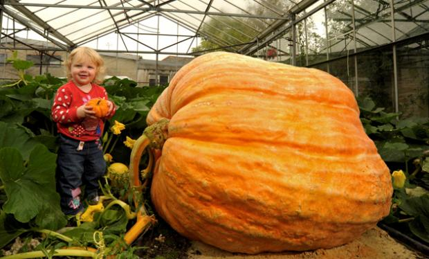 Bailey Martin next to the huge pumpkin