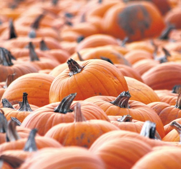 Daily Echo reader Andrew Davis sent in this picture of pumpkins at Romsey