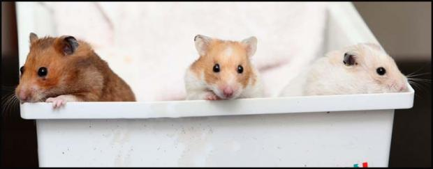 Three more hamsters have been found dumped in a bin