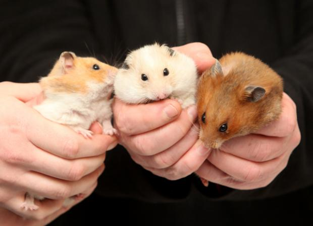 Hamster that were dumped in a bin
