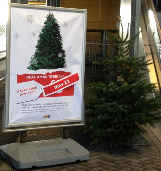 The real Christmas tree for just £1