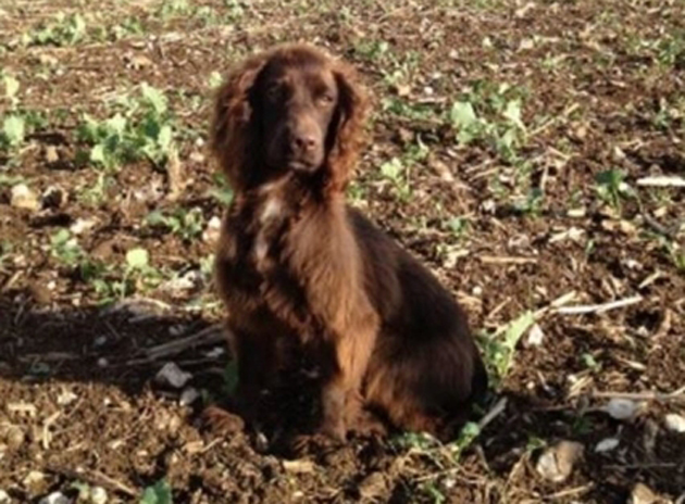 More dogs stolen in Hampshire