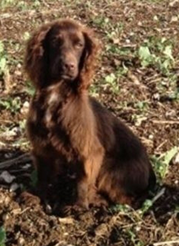 Organised gangs stealing dogs in Hampshire