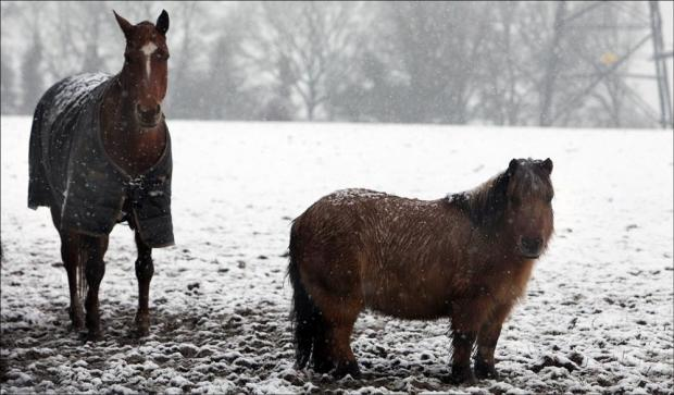 More snow hits Hampshire