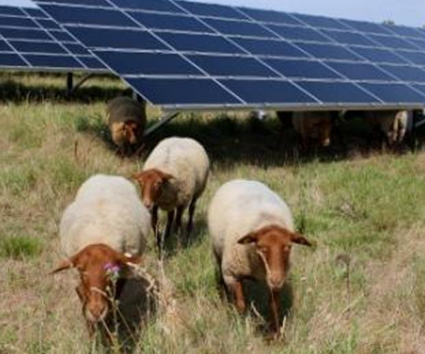 Huge solar farm plan axed
