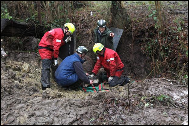 Rescue operation to save horse trapped in ditch