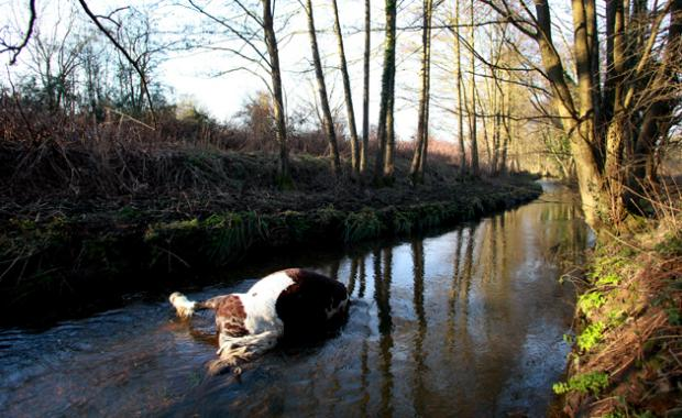The horse in the stream at Monks Brook in Eastleigh