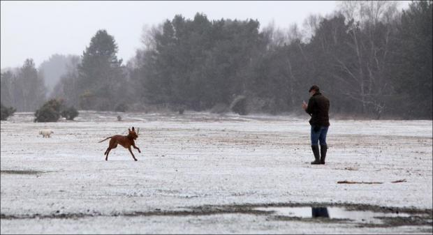 Snow in the New Forest this morning.