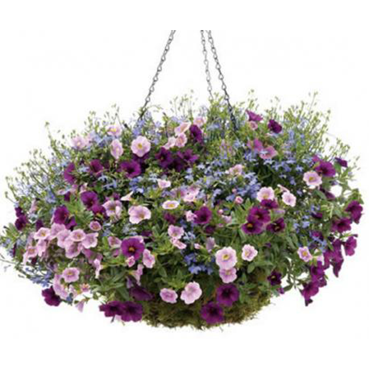 Hanging baskets were among the property stolen