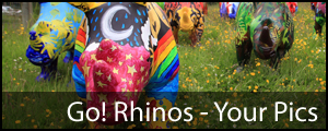 Daily Echo: Go Rhinos Your Pics
