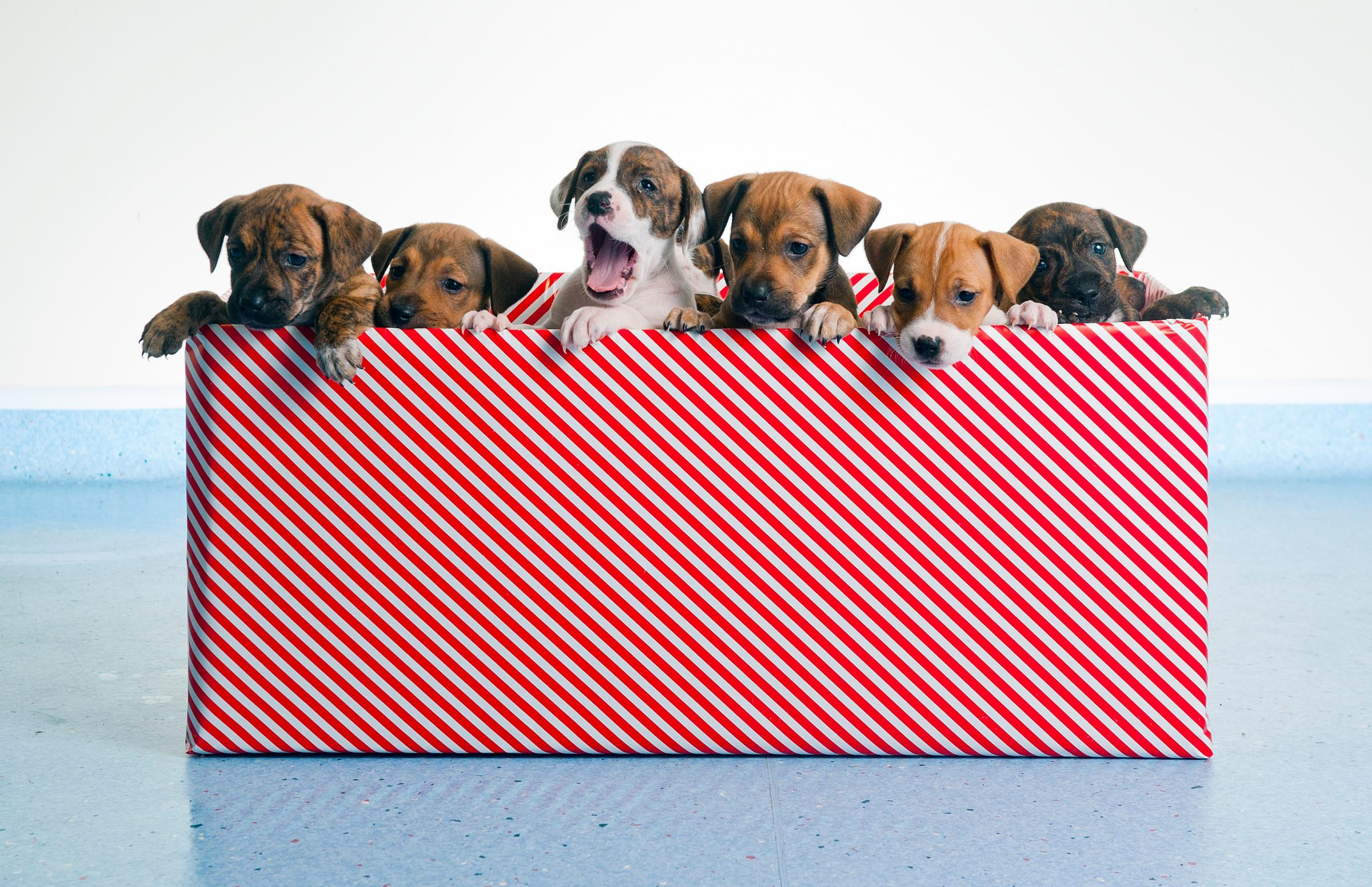 Twelve dogs of Christmas have all found homes