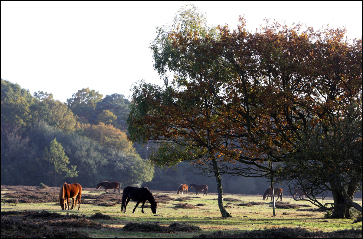 Sunday walk in the New Forest