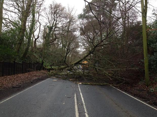 The fallen tree on the A337. Photo by @LymingtonCops on Twitter