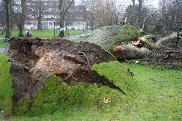 A tree is brought down in Palmerston Park.