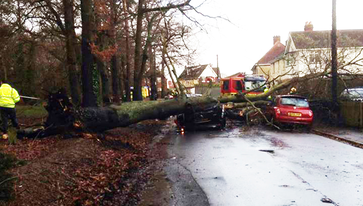 Toddler rescued as tree crashes down on car. Photo by Kit Ship