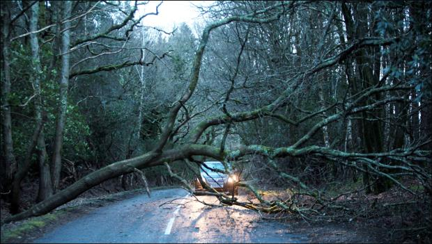 Watch out for rogue traders offering to remove dangerous trees