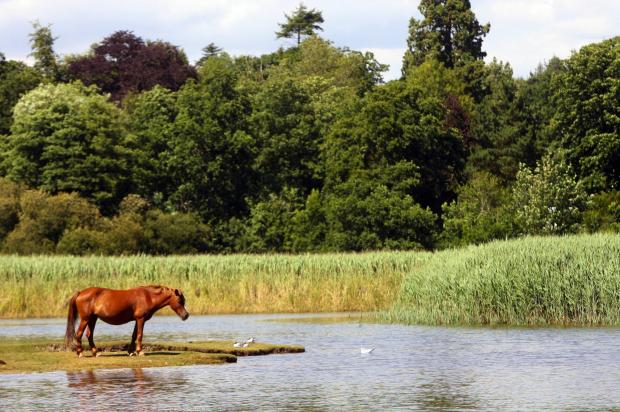 Daily Echo: The New Forest