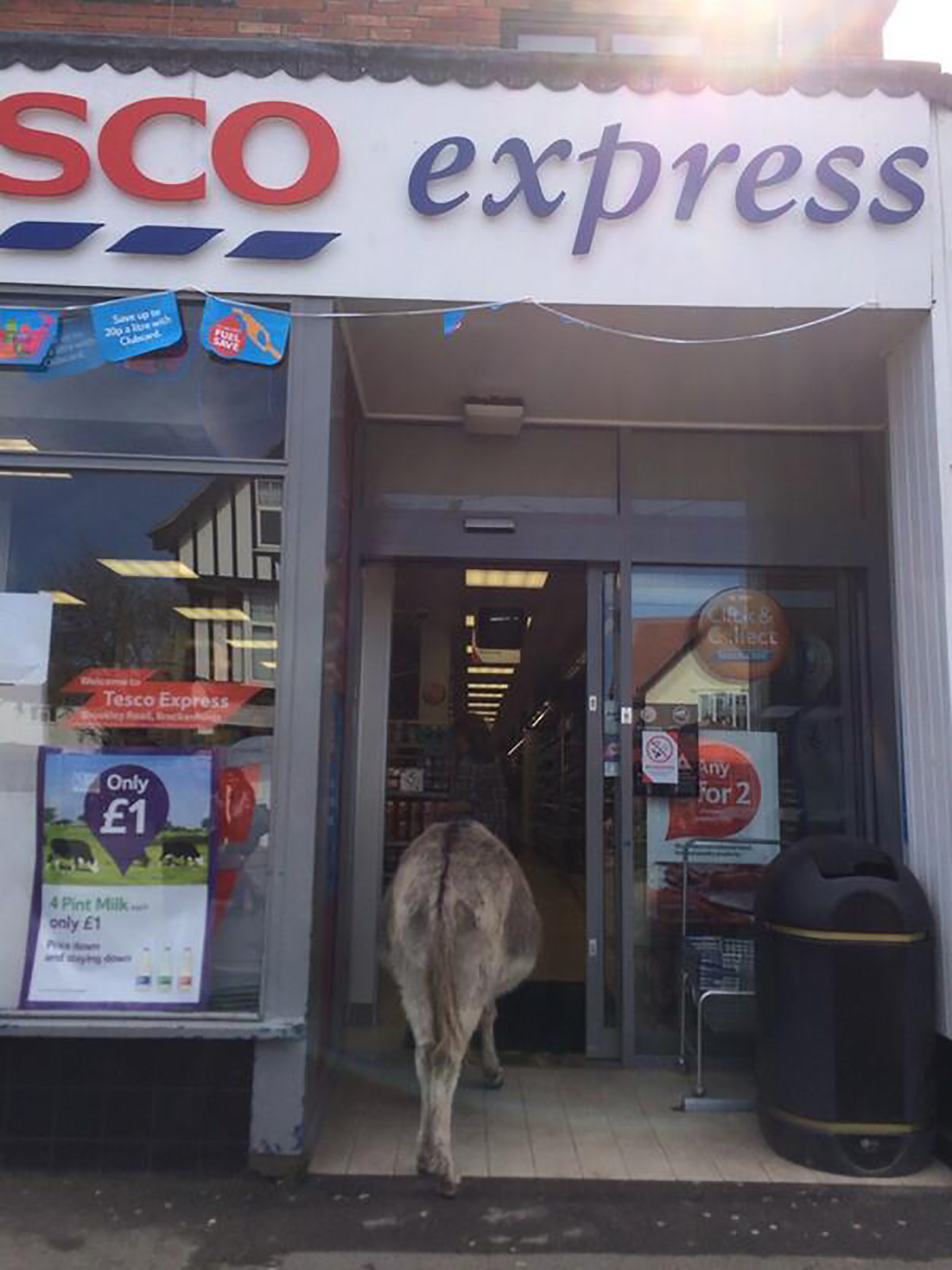 A donkey walks into Tesco Express in Brockenhurst