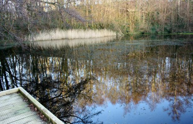 A guided walk takes place at Swanwick Lakes, pictured, on Thursday