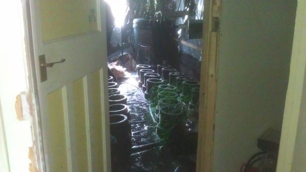 Drugs bust on home cannabis farm in Southampton