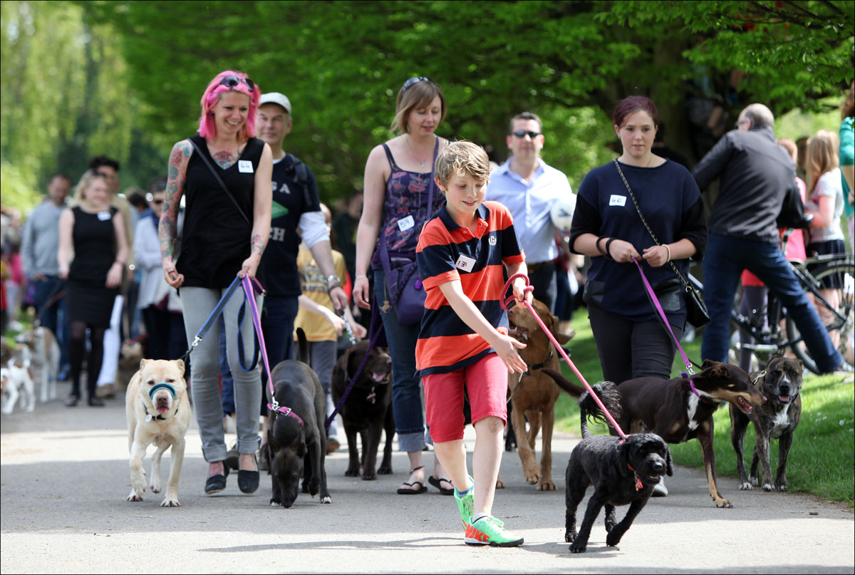 Dogs parade at the Save the Rec event.