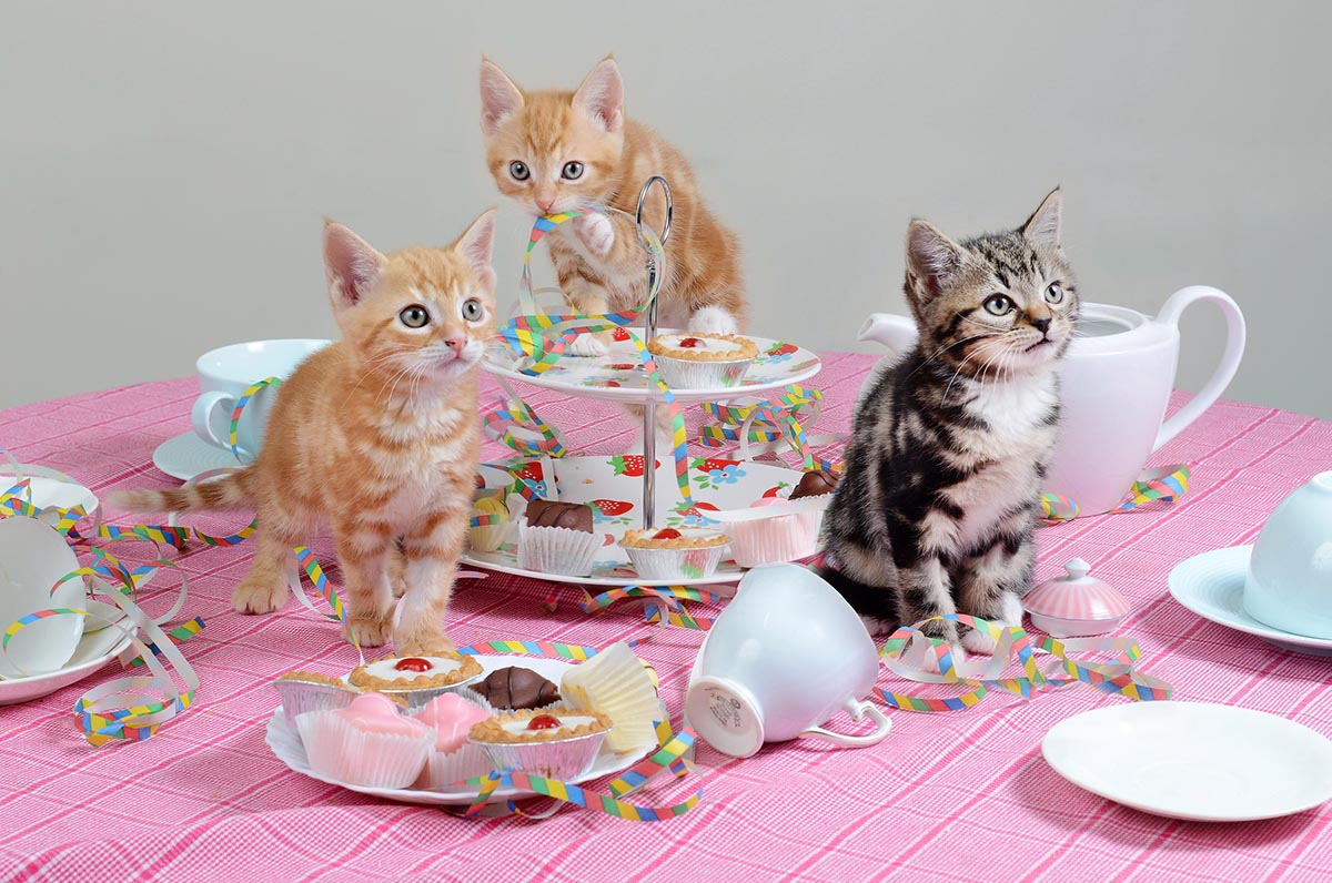 Homeless kittens want you to join their tea party