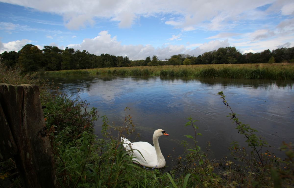 Permits will be issued to cut the levels of phosphate pollution being pumped into the River Itchen